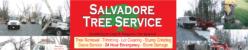 Salvadore Tree Service  (518) 664-7921